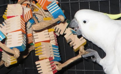 آیا قفس طوطی باید پر از اسباب بازی باشد؟