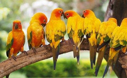 طوطی های کانور خورشیدی پرنده های بسیار فعالی هستند
