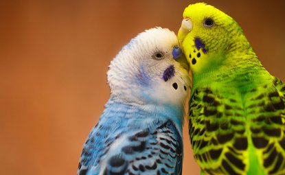 به مرغ عشق چه ویتامینی باید بدهیم؟